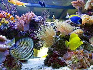 Морской аквариум 9 фото gt gt gt
