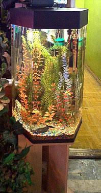 аквариум - башня